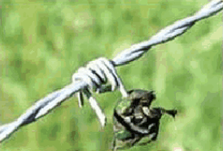 barbed wire4.png
