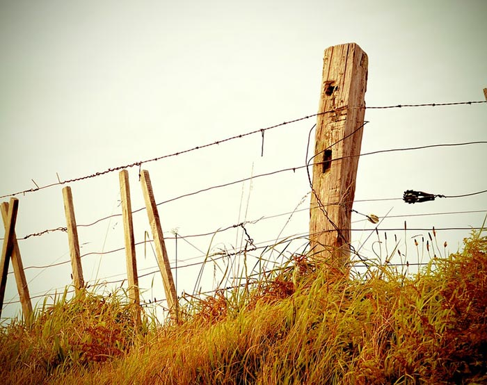 Barbed wire-08
