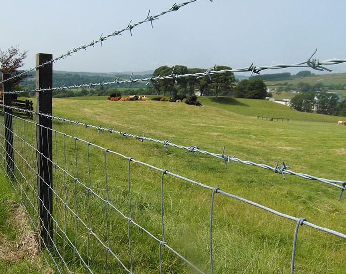 Feild Fence 06