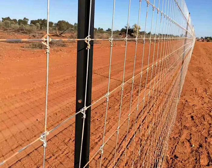 Feild Fence 08